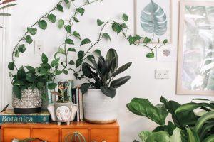 garden in a small space